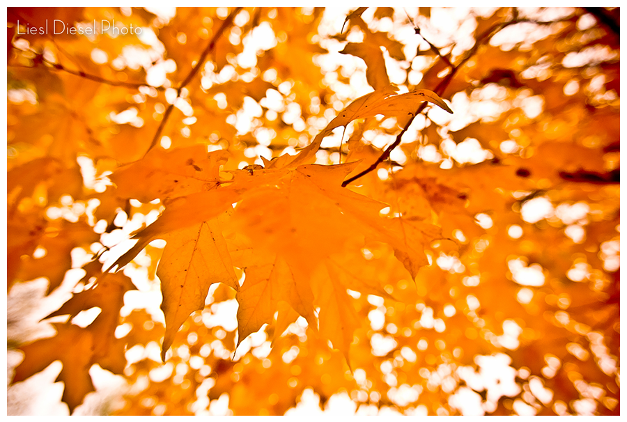 LieslDieselPhoto-autumn-leaves